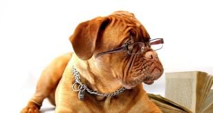 Porta il tuo cane al lavoro
