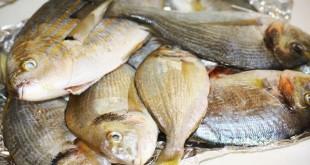 Mari bollenti, il pesce diminuisce