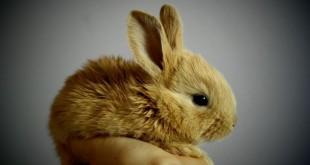 Conigli allevati sempre meno