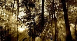 Taglio degli alberi, un prezzo alle emissioni di CO2?
