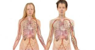Psiche e intestino sono legati