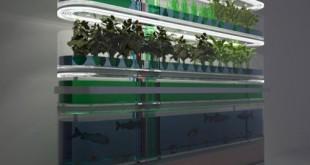 Acquaponica, la bio fattoria a Km zero. Senza terra, dove vuoi
