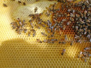 Miele, la produzione 2016 accentua la crisi del settore