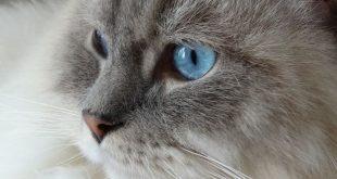 Un Natale di strenne feline per gli amanti dei gatt