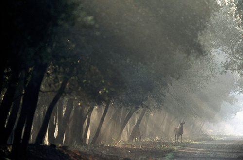 Sperduta nella nebbia padana, il fascino discreto di Mesola e del suo Gran Bosco