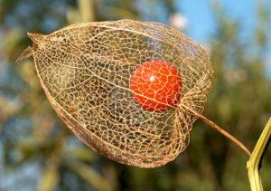 La frutta esotica, bella, gustosa e ricca di vitamine e sali minerali
