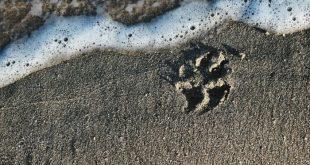 Animali tra di noi: amici pelosi, tutto quello che c'è da sapere