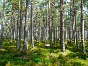 Incendi nei boschi, alberi in fiamme. Interviene Gaia pianeta verde