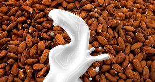 Latte vegetale: lattosio assente, proprietà multiformi. Ma è buono?