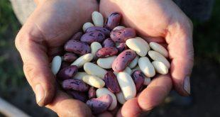 Alimenti 10 e lode: borlotti, canellini, di Spagna: purché siano fagioli