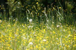 Allergie a primavera, un vero disagio: riniti allergiche da polline in agguato