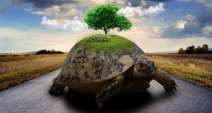Giornata della lentezza. Ecco tre modi per rallentare