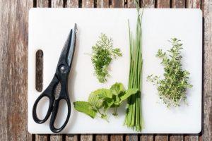 Alimenti 10 e lode. Timo, ottimo in cucina e come rimedio naturale