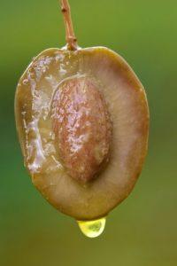 Alimenti 10 e lode Olio extra vergine d'oliva: davvero unico