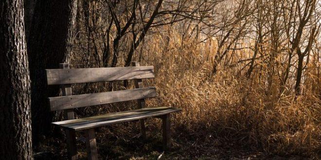 Poi l'estate svanisce e passa, e arriva ottobre. Si fiuta l'umidità, si sente una chiarezza insospettabile, un brivido nervoso, una veloce esaltazione, un senso di tristezza e di partenza. (Thomas Wolfe)