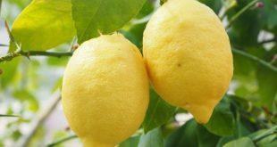 Alimenti 10 e lode. Limone: utile anche in caso di anemia