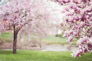 Maledetta primavera: che cosa sono le allergie crociate?
