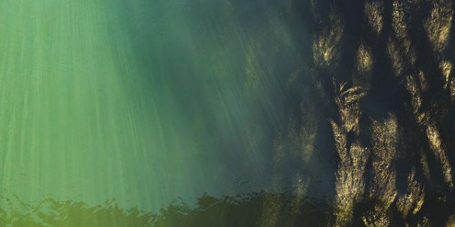 Alghe marine: ecco quelle che riducono la glicemia nel sangue
