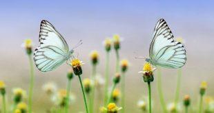 Giardino delle meraviglie: terapeutico e multisensoriale, per bambini