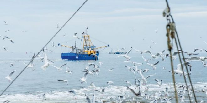Oceani pieni di vita: bisogna promuovere azioni concrete