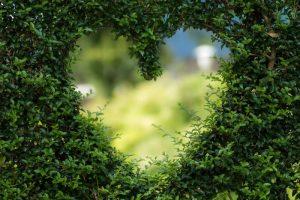 Problemi valvolari: colpiscono il cuore di oltre un milione di italiani