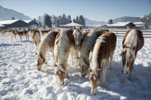 Mercatini di Natale a Francoforte e nel Kufsteinerland