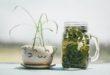Malva e piantaggine: delicate come solo natura sa essere