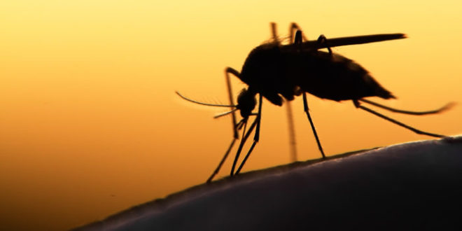 Pericolo zanzare: non sottovalutiamo questo piccolo killer