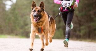 Dog Sport: 10 consigli da non dimenticare se ti alleni col tuo cane