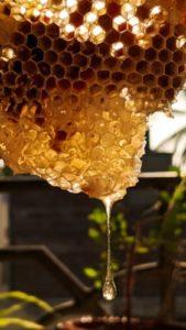 Miele per la pelle: la naturale dolcezza che ci fa belle