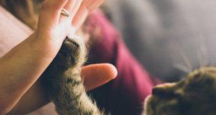 La pet therapy: fantastico supporto sia per i più piccoli che per i più grandi