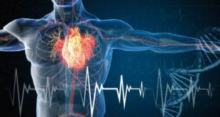 Patologie cardiovascolari: fattori di rischio e prevenzione