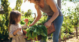 Doppia Piramide: per promuovere modelli alimentari sani e sostenibili
