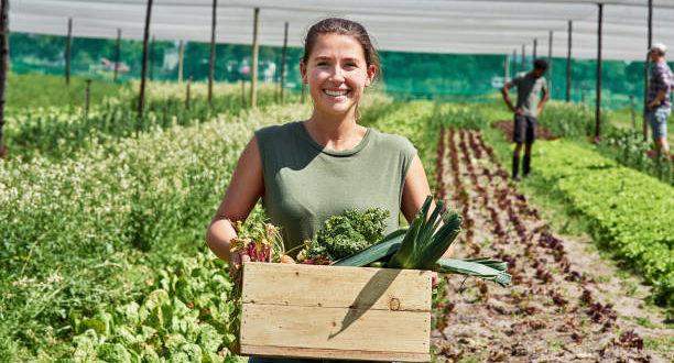 Sistemi alimentari: le 7 raccomandazioni per renderli sani e sostenibili