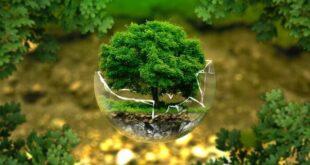 Giornata Mondiale dell'Ambiente: tra iniziative, eventi e dibattiti