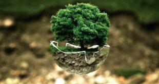 10 idee per salvare il Pianeta: il libro per vivere nel rispetto dell'ambiente