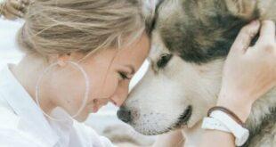 Trip For Dog: 5 incredibili esperienze da fare con il vostro cane