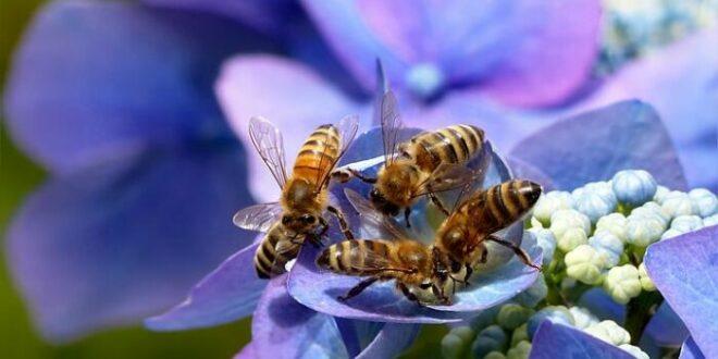 Punto nel vivo: la campagna dedicata all'allergia al veleno di imenotteri